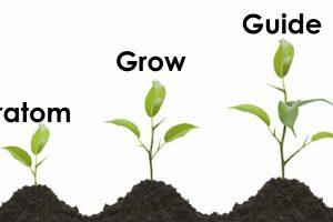 Kratom Grow guide
