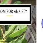 Kratom for anxiety