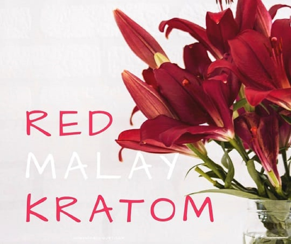 Why You Should Consider Using Red Malay Kratom?