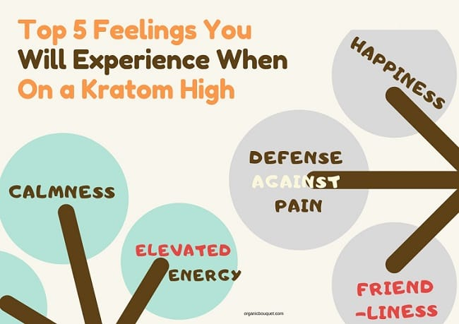 Top 5 Feelings You Will Experience When On a Kratom High