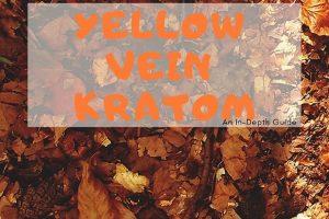 Yellow Vein Kratom Guide