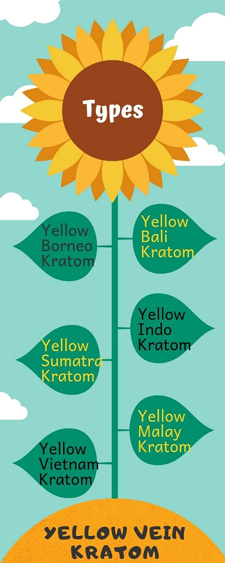 Yellow Vein Kratom types