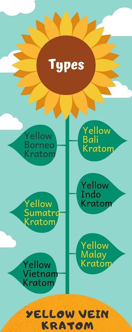 Yellow Vein Kratom types
