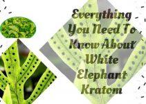 White Elephant Kratom Use